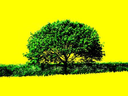 Green Tree Yellow Field photo