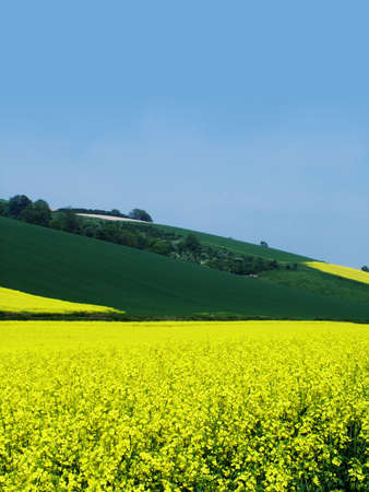 yellow fields photo