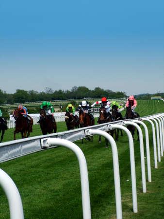 racehorses: Horse Racing
