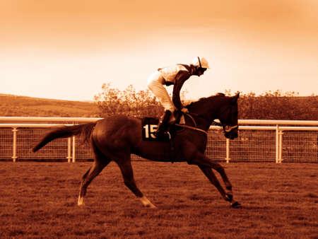 cavallo in corsa: Ippica  Archivio Fotografico