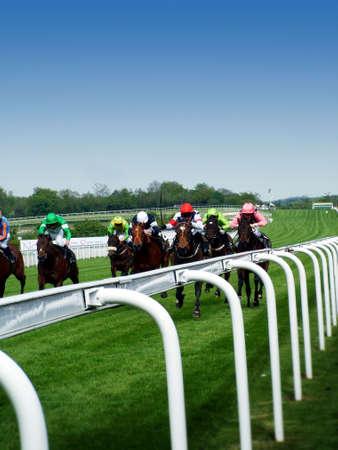 carreras de caballos: Caballos de carreras