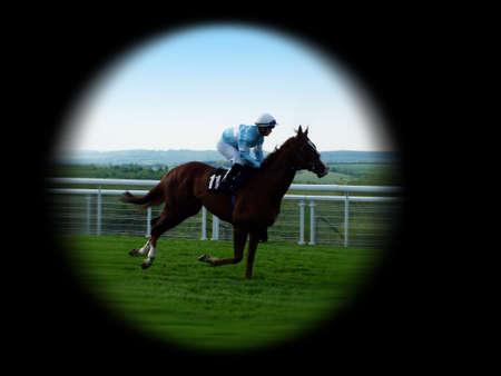 racehorses: Race Horse