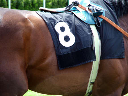 Number 8 Race Horse Stock Photo