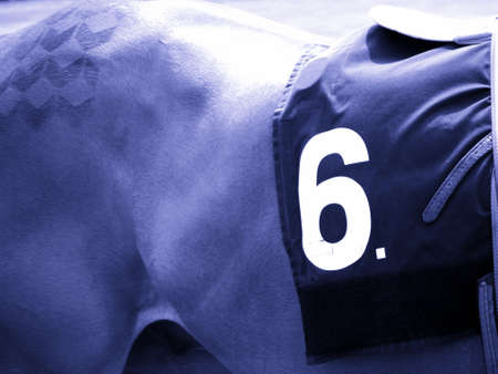 racehorses: Number 6 Race Horse