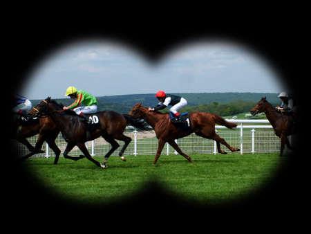 ungulate: race horses