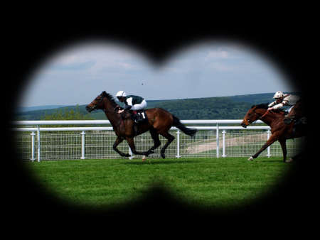 racehorses: renpaarden