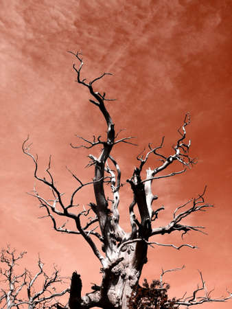 Toter Baum Lizenzfreie Bilder