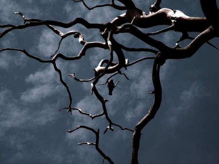 sean gladwell: Uccello in albero