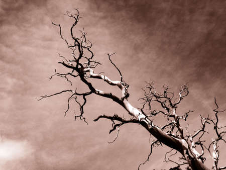 Dead Branches Stock Photo - 371058