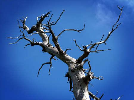 Dead Branches photo