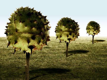conker trees photo
