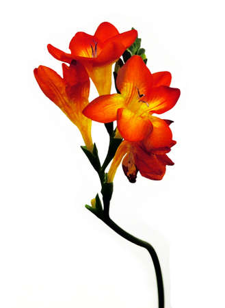 Flower with orange petals Stock Photo - 377601