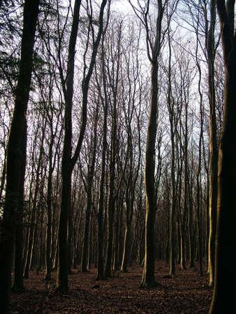 Woods Stock Photo - 380212