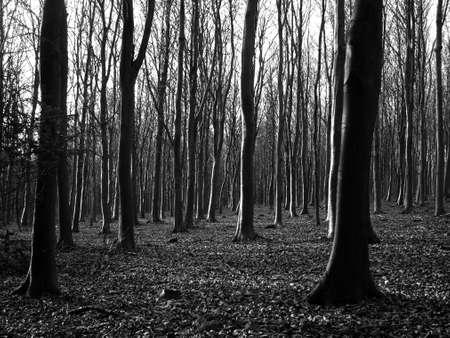 woodland Stock Photo - 380223