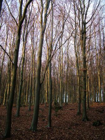 woodland Stock Photo - 380222