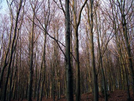 woodland Stock Photo - 380221