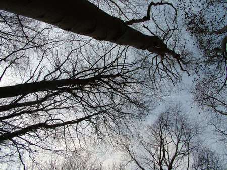 Trees looking up Stock Photo - 380214