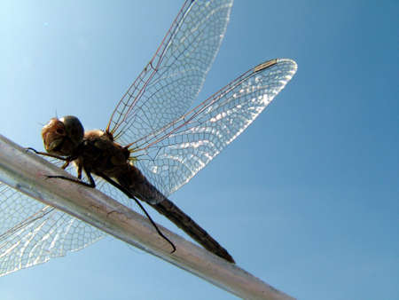 uncluttered: Dragonfly resting on line