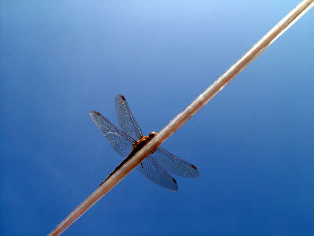 uncluttered: Dragonfly resting on line