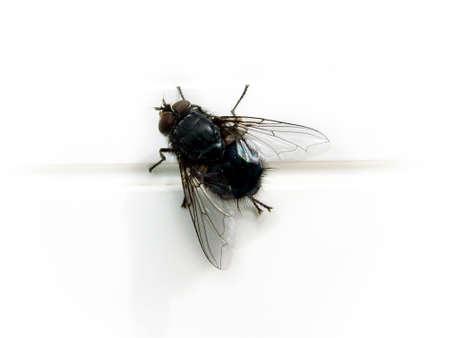 beine spreizen: Fliegen