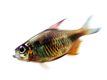 vividly: Tropical Fish