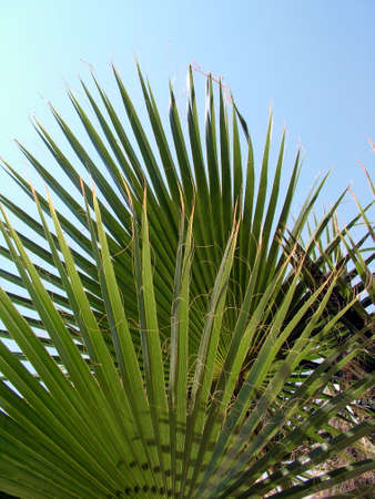 palm leaves Stock Photo - 483773
