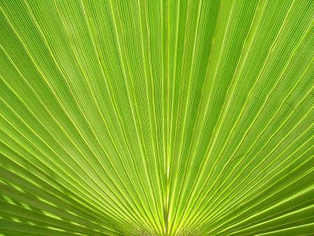 palm plant Stock Photo - 483768