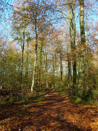 Forest Stock Photo - 630887