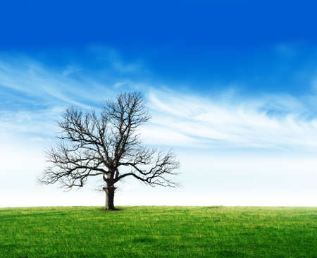 Single tree Stock Photo - 2067310