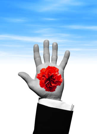 Red Flower in hand photo