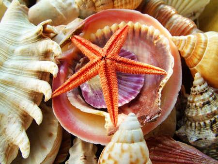 Sea shells photo