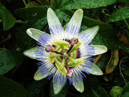 flower Stock Photo - 3674444