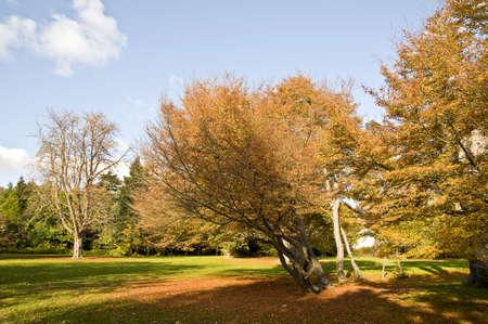 Park in autumn Stock Photo - 3799152
