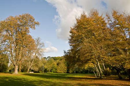 Park in autumn Stock Photo - 3799148