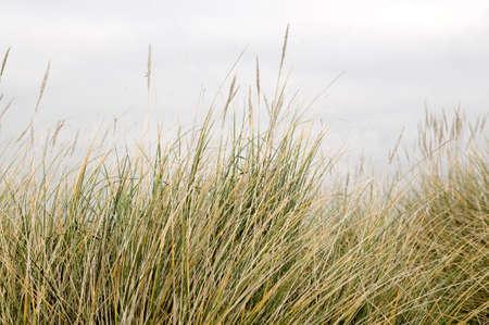 Long grass Stock Photo