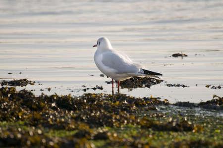 Seagull Stock Photo - 4098200