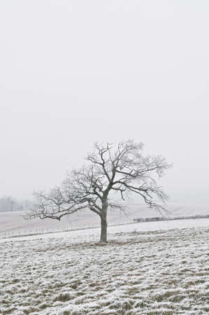 Tree in winter photo