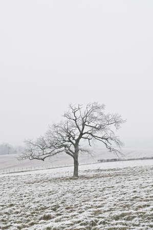 Tree in winter Stock Photo - 4140959
