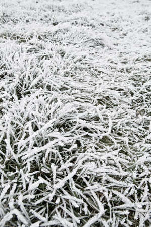Frost on grass photo