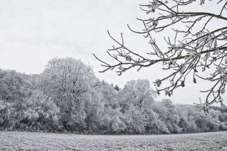 snow on trees photo