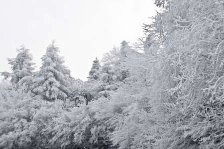 snow on trees Stock Photo - 4140967