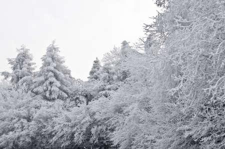 snow on trees Stock Photo - 4140967