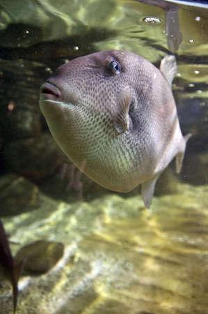 Sea fish Stock Photo - 4214936