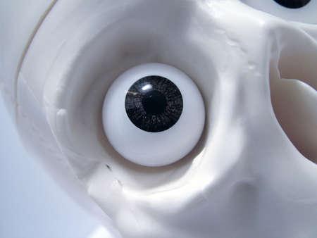skull eye socket photo