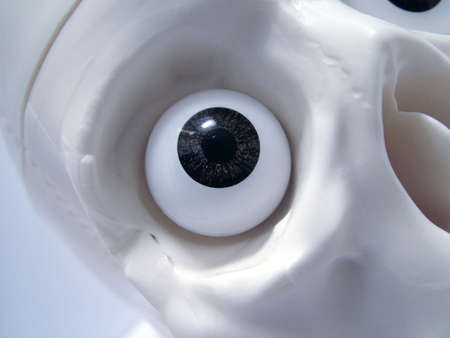 eye socket: skull eye socket
