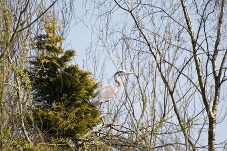 great bay: Heron
