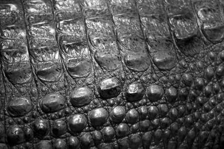 Alligator Skin Stock Photo