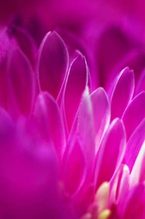 atmospheric: Pink flower