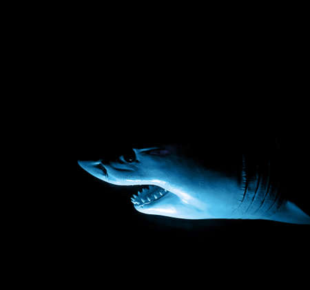 shark Stock Photo - 9368063