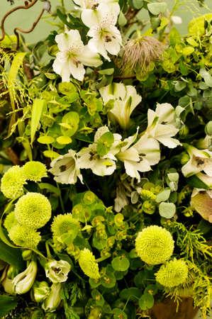 flora: Green flora